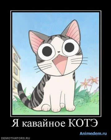 Я кавайное котэ
