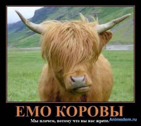 Эмо коровы